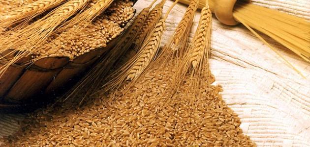 فوائد عشبة جنين القمح