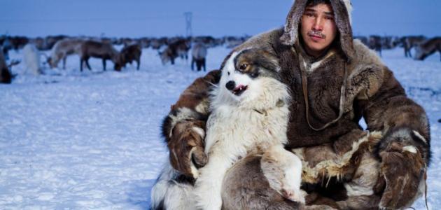 كيف يعيش الناس في القطب الشمالي