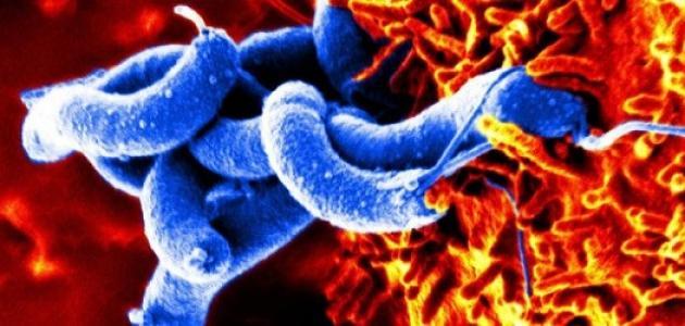 كيف يمكن للبكتيريا أن تكون نافعة للإنسان