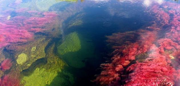 أين يقع نهر كانو كريستال
