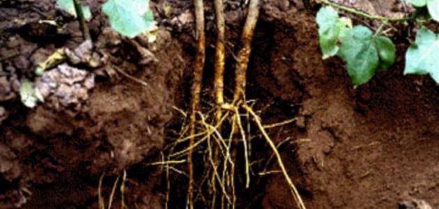 كيف تمتص النباتات الماء والأملاح المعدنية