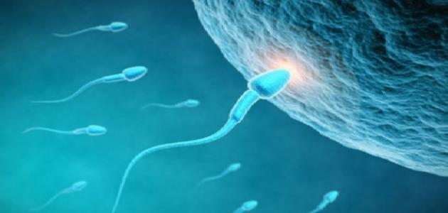 كيفية حصول الحمل