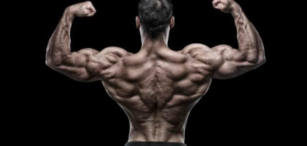 تمارين تشريح عضلات الجسم