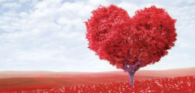 حكم مؤثرة عن الحب