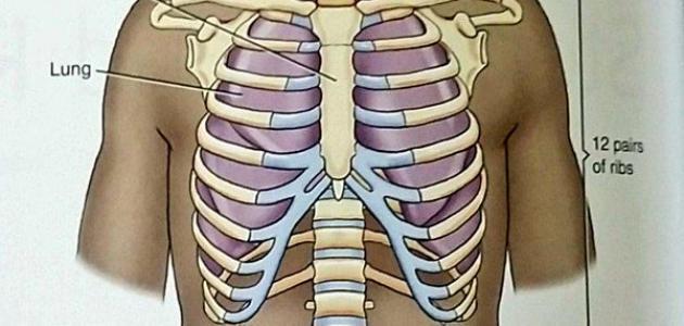 كيف نحافظ على القفص الصدري