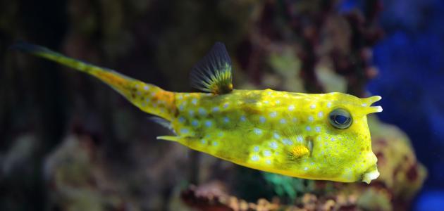 أجمل سمكة في العالم