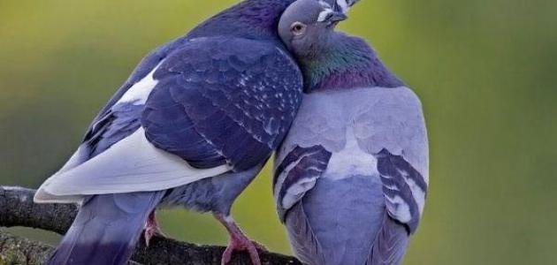 كلام حب وغزل للزوج