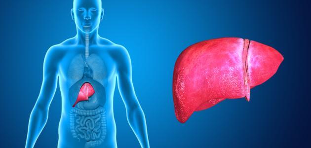 نتيجة بحث الصور عن طرق للحفاظ على صحة الكبد!