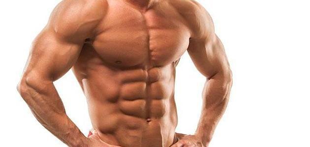 كيف أزيد حجم العضلات