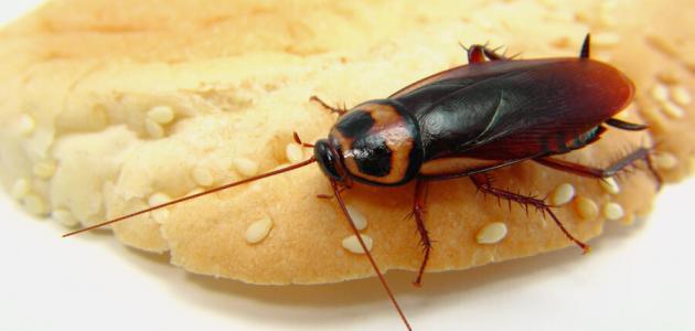 تخلصي حشرات مطبخك بسهولة