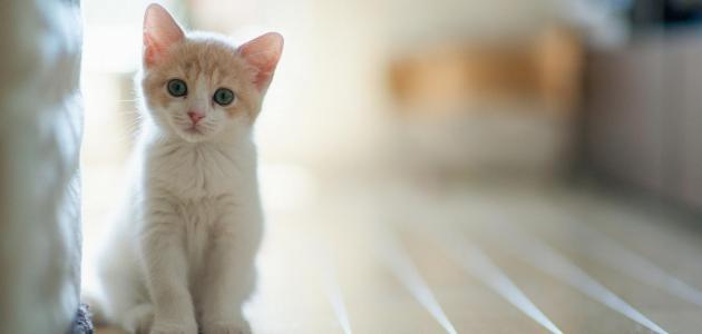 شعر القطط هل هو مضر