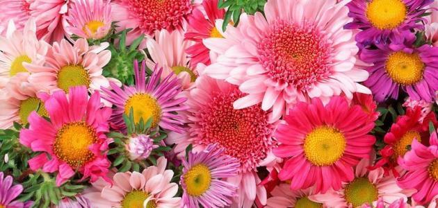 أنواع الزهور