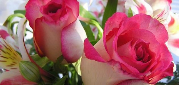 أنواع الورود
