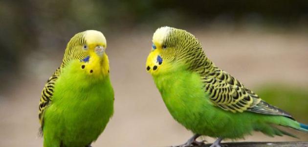 أنواع العصافير