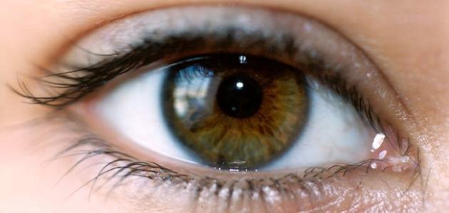 53a874c66 بحث حول العين - موضوع