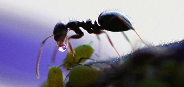 بحث عن النمل