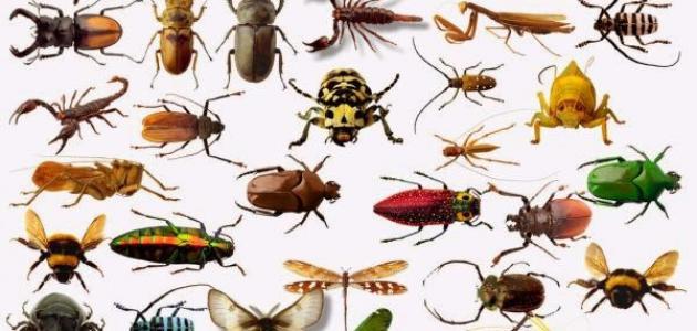 أنواع الحشرات