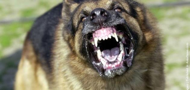 أنواع الكلاب الشرسة