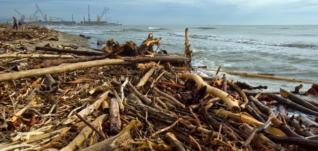 مقال عن حماية البيئة