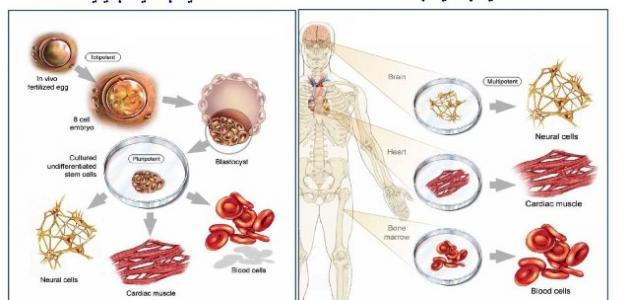 أنواع الخلايا