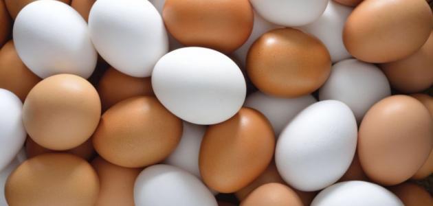 أنواع البيض