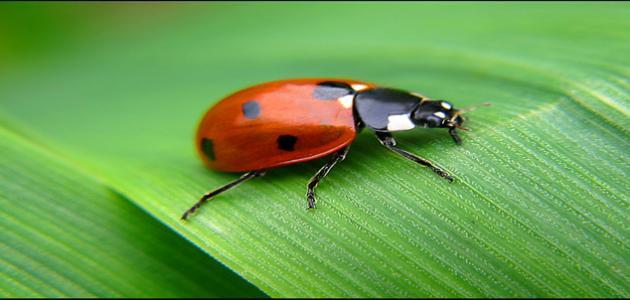 بحث عن الحشرات النافعة مثل النحل