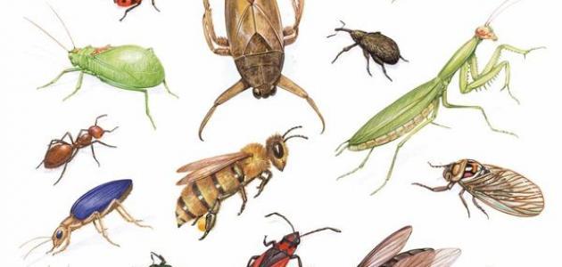بحث عن الحشرات