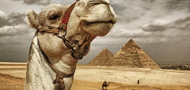 السفر إلى مصر