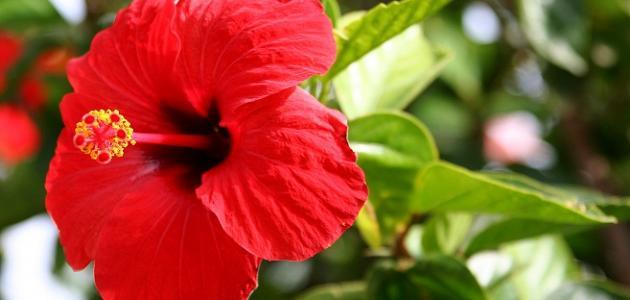 أنواع الزهور وأسماؤها
