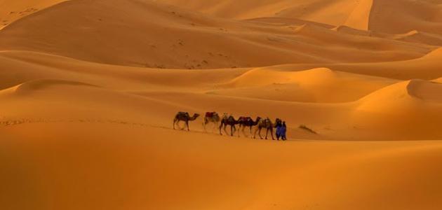 أين تقع أكبر صحراء بالعالم