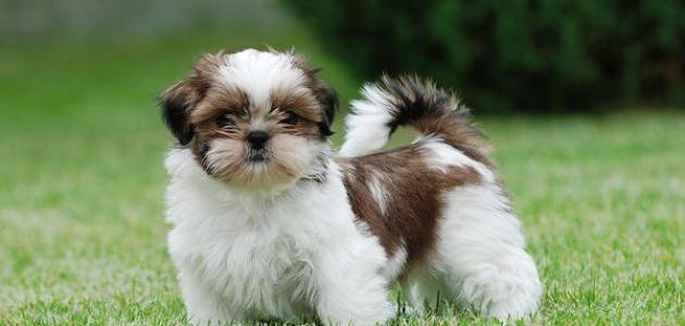 أنواع الكلاب الأليفة
