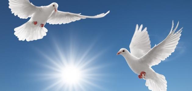 بحث عن السلام