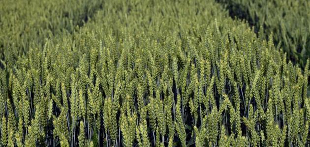 بحث عن الزراعة