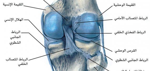 f080e46df علاج غضروف الركبة - موضوع