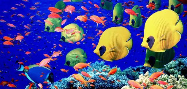 الأسماك تتغلب على نقص الأكسجين