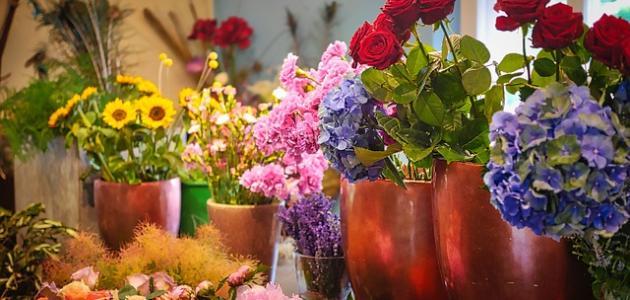 كلام حلو عن الورد