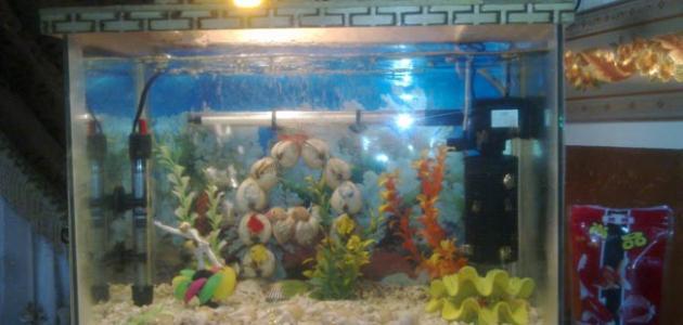 طريقة عمل فلتر حوض السمك