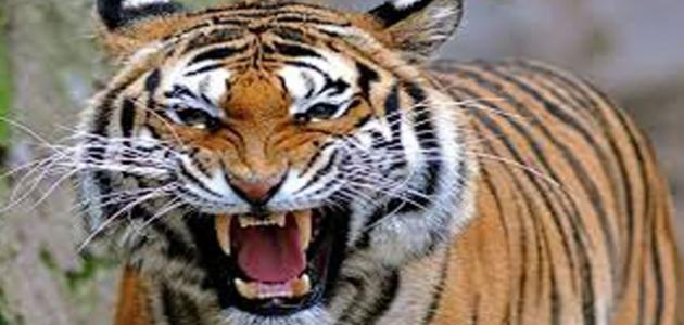 أنواع الحيوانات المفترسة - موضوع