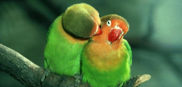 عبارات عن الحب الصادق