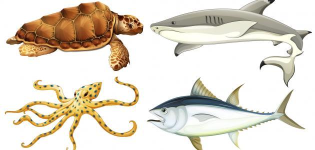 تصنيف المخلوقات الحية