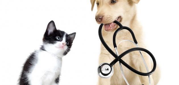 أمراض الكلاب وكيفية علاجها