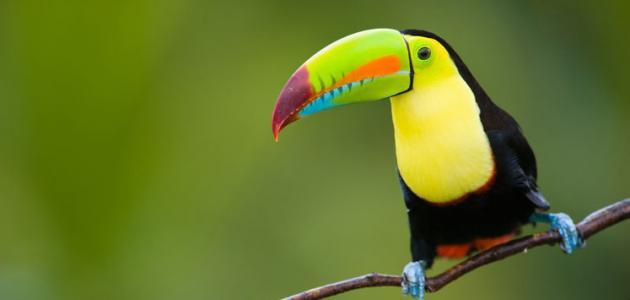 أنواع الطيور في العالم