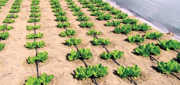 تقرير عن الزراعة موضوع