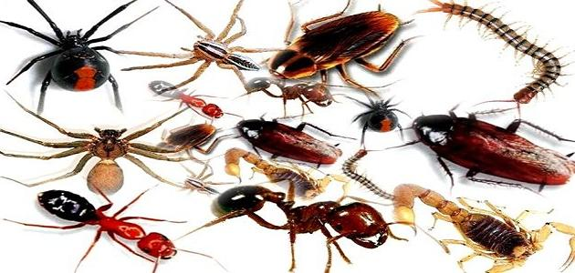 أنواع الحشرات المنزلية