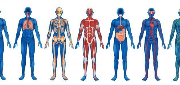 بحث حول جسم الإنسان