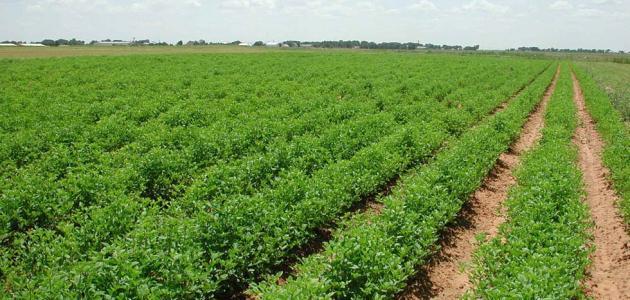 بحث عن البيئة الزراعية