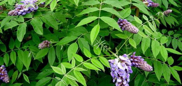 Aarda Info الصور والأفكار حول بحث عن النبات الطبيعي والحيوان البري