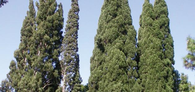أنواع الشجر