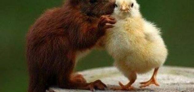 أمثال وحكم عن الصداقة