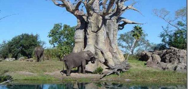 أجمل حديقة حيوانات في العالم